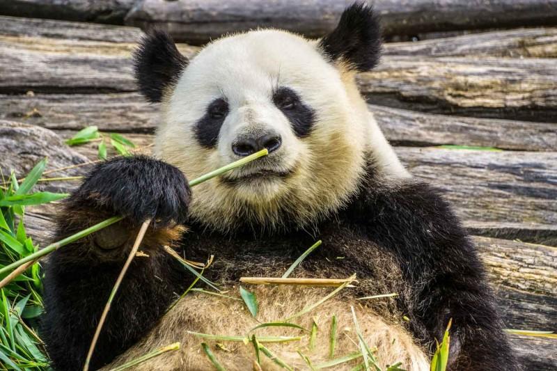 Bambustuch Reinigen Mit Bambus Spaetzlewunder De